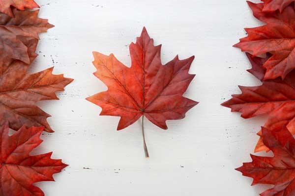 International Experience Canada (IEC)